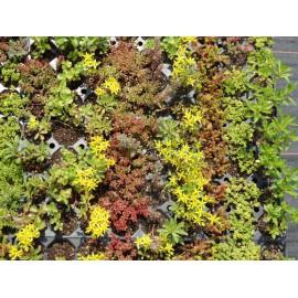 Pflanzensortiment Sedumteppich für 4 m²