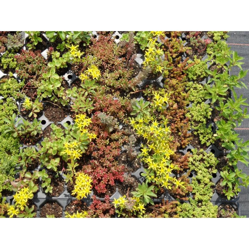 dachbegrünungspaket sedumteppich für 4 m² - dachstauden, Gartenarbeit ideen