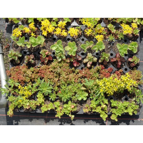 Dachbegrünungspaket Halbschatten I für 4 m²