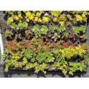Pflanzensortiment Halbschatten I für 4 m²