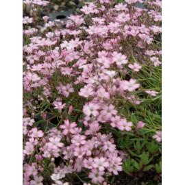 Dachbegrünungspaket Niedrige Blütenstauden für 2 m²