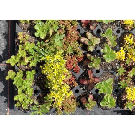 Pflanzensortiment Halbschatten I für 2 m²