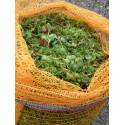 2 kg Sedumsprossenmischung für 20 m² Dachbegrünung