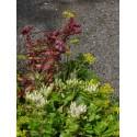 Dachbegrünungspaket Lavendelheide für 4 m²
